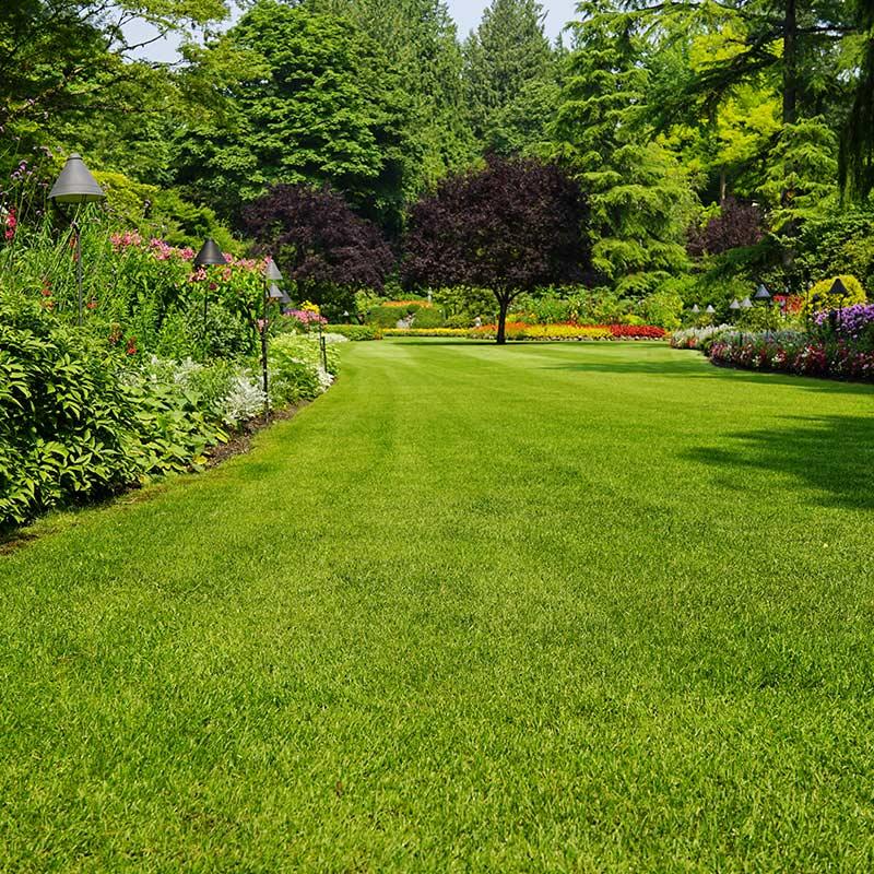 Garden Maintenance Kent and Sussex